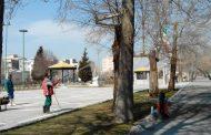 پایلوت اجرایی جلوگیری از خزان زودرس درختان چنار- فضای سبز تهران